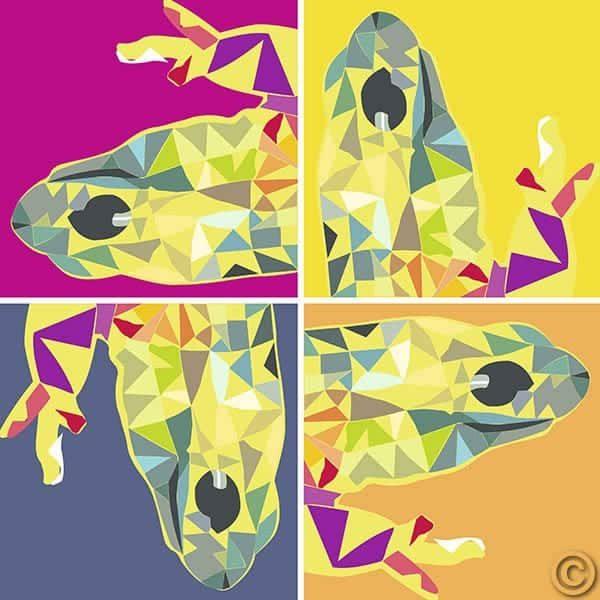 Salamandra 10