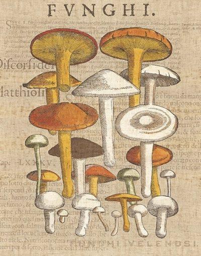 Funghi Velenosi II