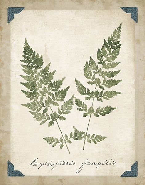 Vintage Ferns VII