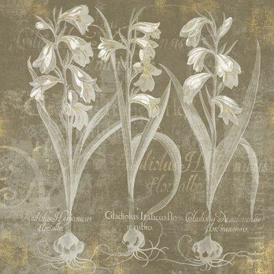 Flower Lines I
