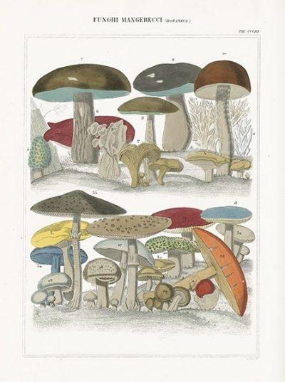 Funghi Italiani I