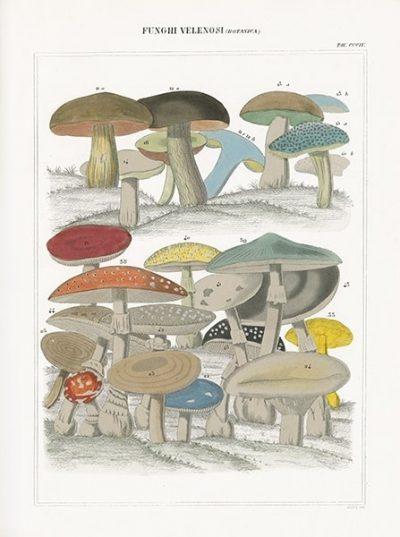Funghi Italiani II