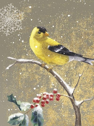 Winter Birds Goldfinch Color