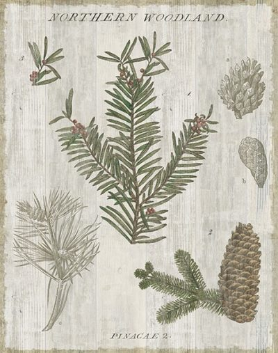 Woodland Chart II