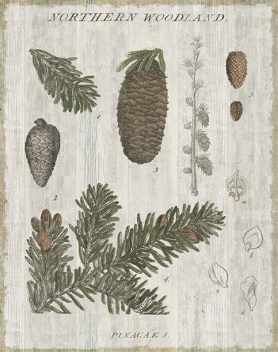 Woodland Chart IV