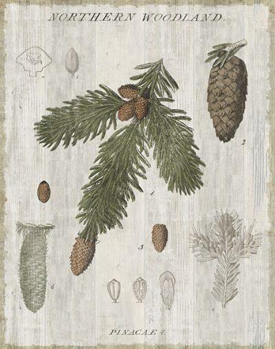 Woodland Chart V