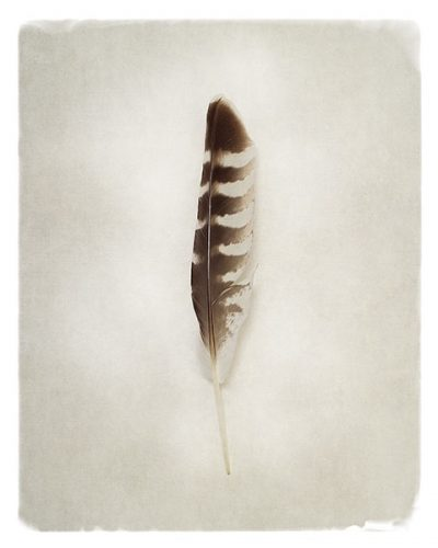Feather IV
