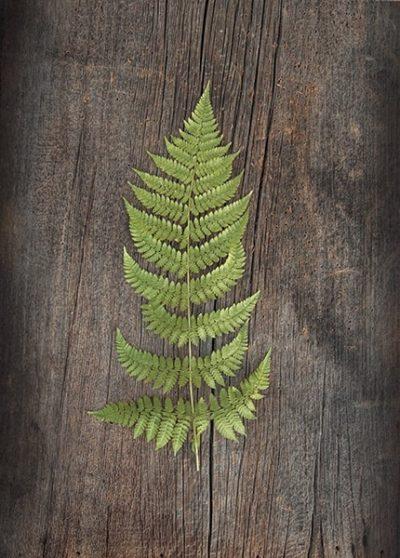 Woodland Fern I