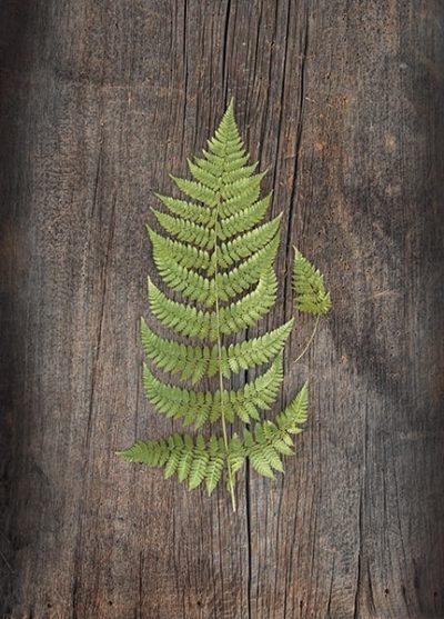 Woodland Fern IV
