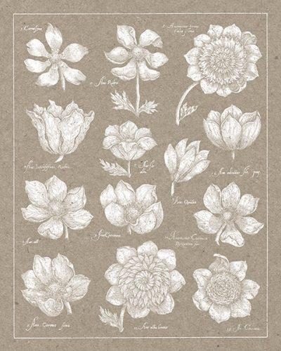 Anemone Plate I