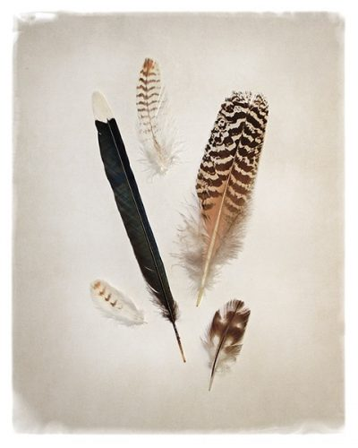 Feather Group II