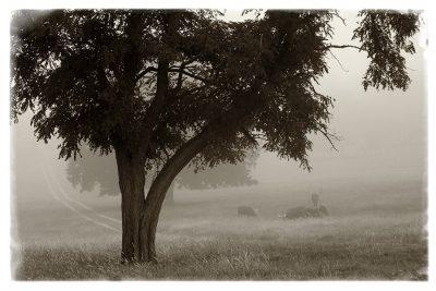 Calm Mist