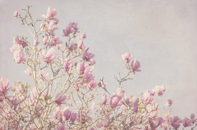 Pink Tree Tops I