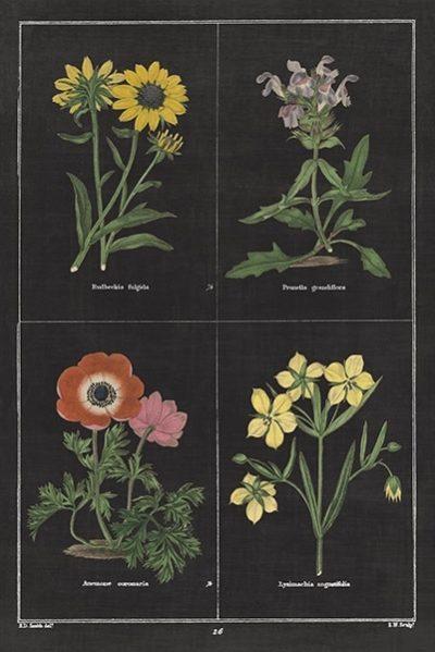 Botanical on Black Chart II