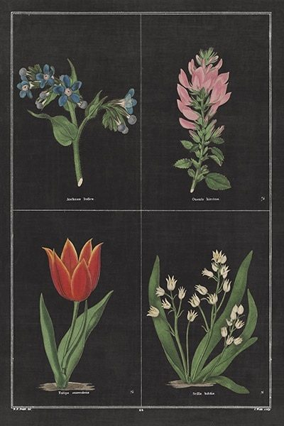 Botanical on Black Chart III