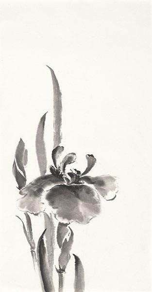 Japanese Iris II