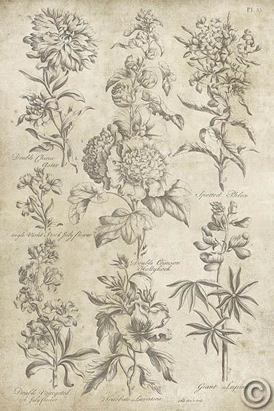 Eden Antique Bookplate III