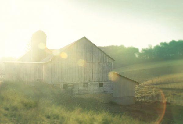 Farm Morning II