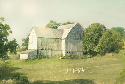 Farm Morning III