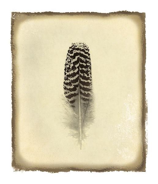 Feather I Vintage