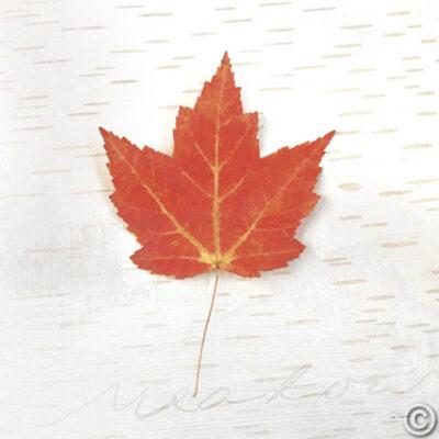 Autumn Colors I