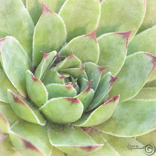 W33280 - Garden Succulents IV Color